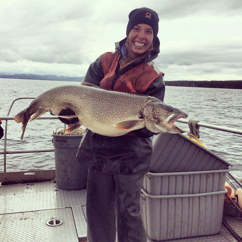 lake trout yellowstone