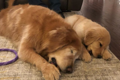 Blind Dog Gets Seeing-Eye Pup Companion