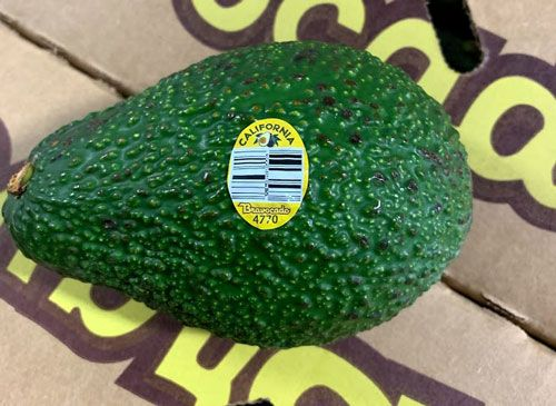 Avocados recalled for possible listeria contamination