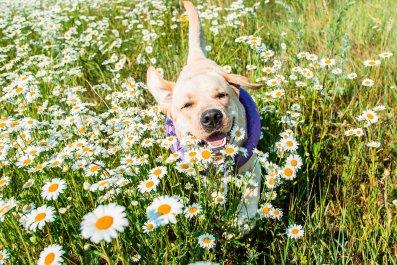 dog spring flowers grass animal stock getty