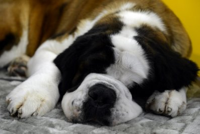 puppy napping dog food