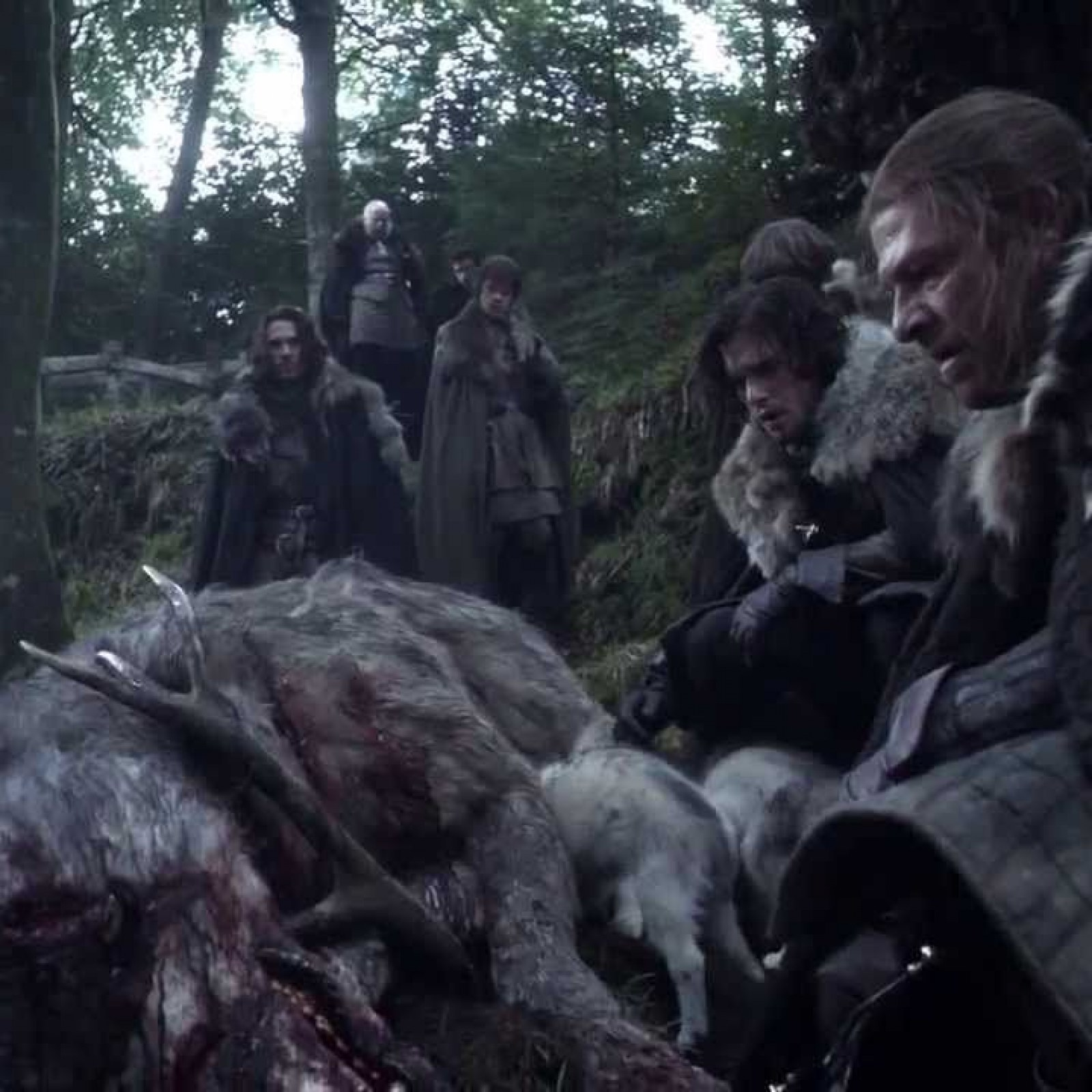 Game Of Thrones Direwolves Where Are The Stark Pets And Which Are