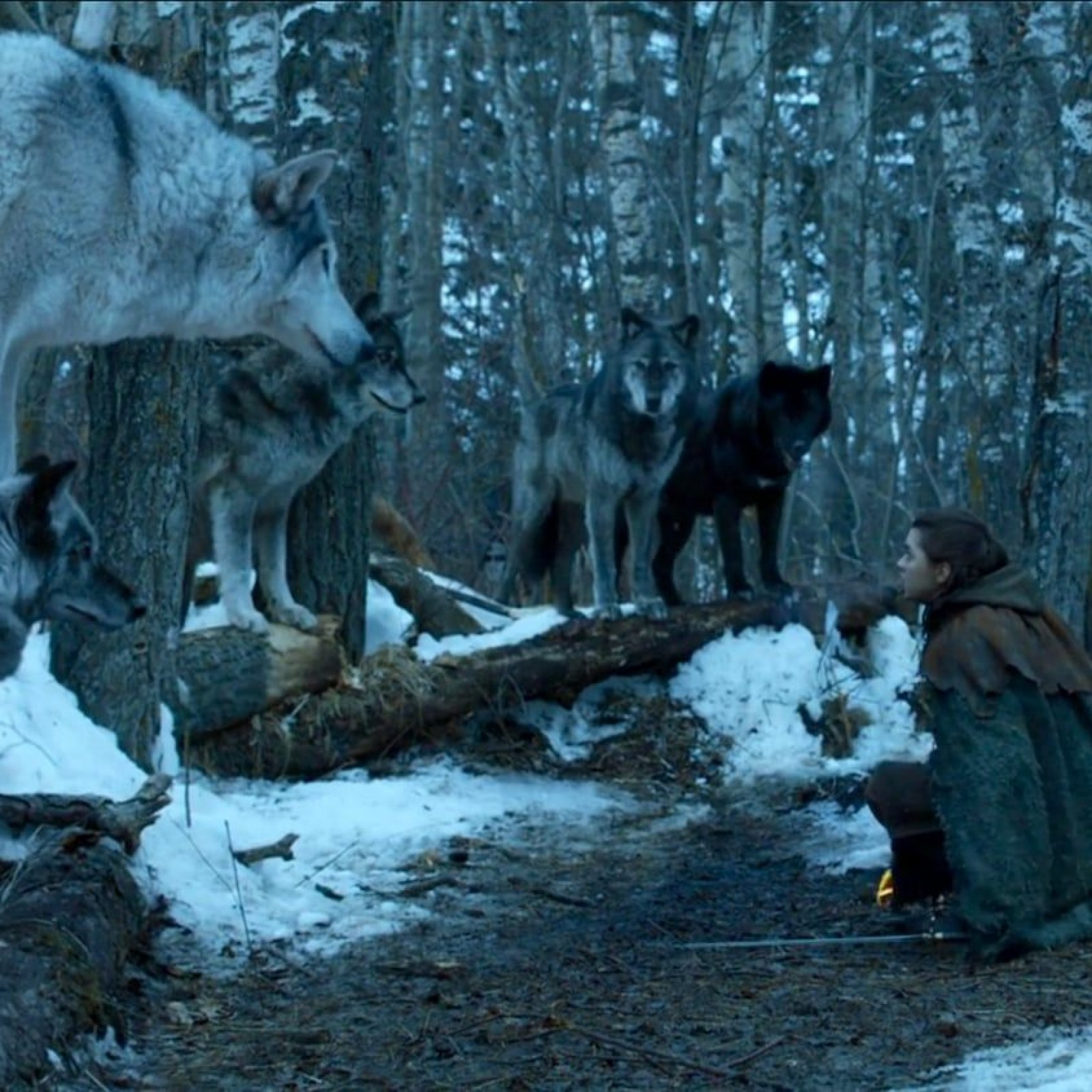 Game of Thrones' Direwolves: Where Are the Stark Pets and