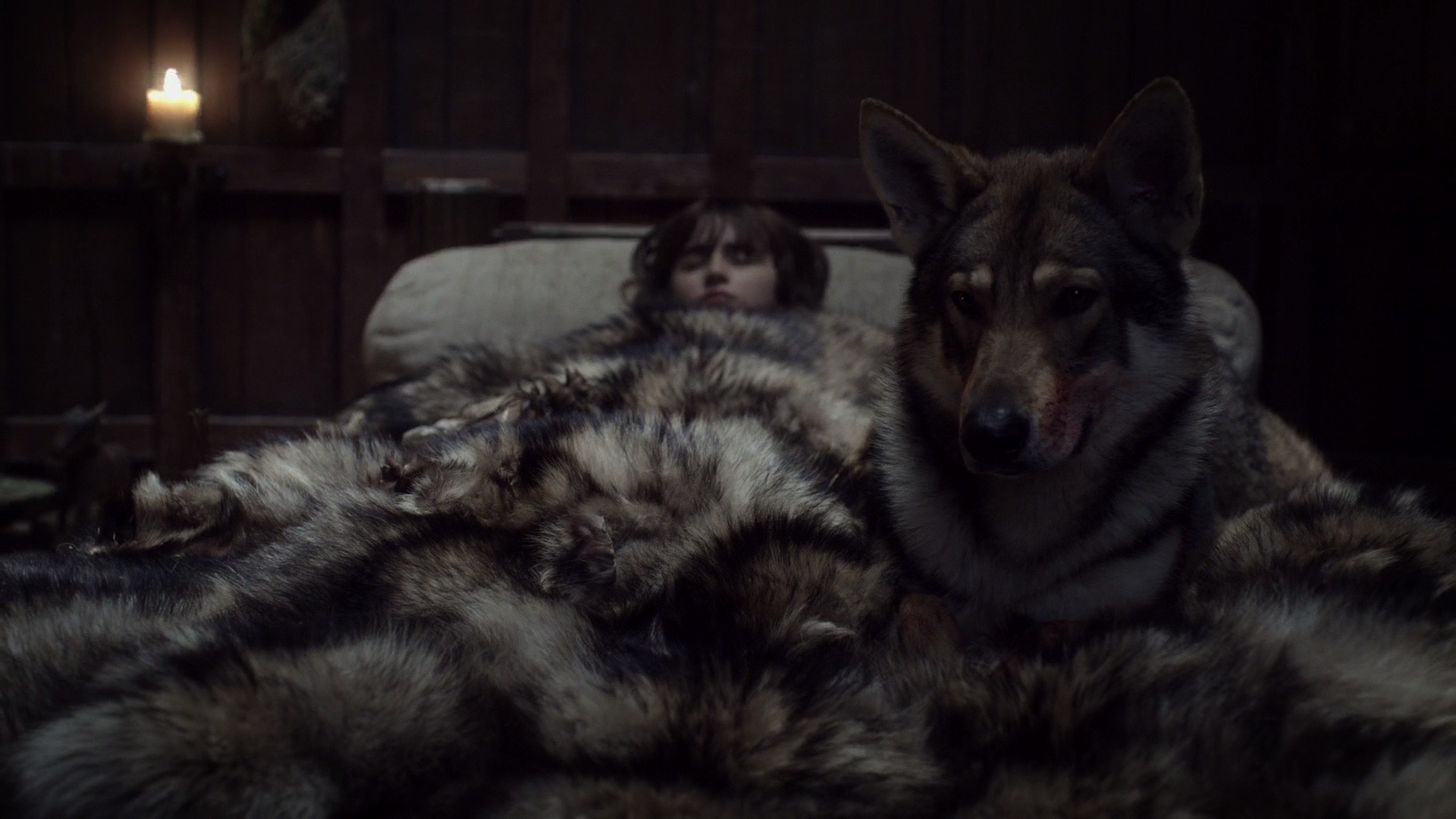 Game Of Thrones Direwolves Where Are The Stark Pets And Which