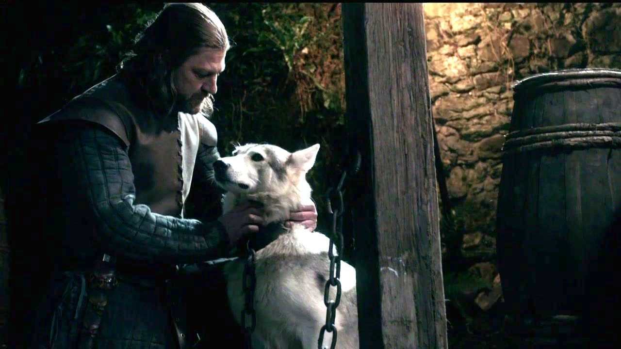 Lady-and-Eddard-Stark-game-of-thrones-direwolves-30439921-1280-720