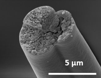 Spider silk, bacterial rope factory [19659014] Spider silk proteins that can be spun into strong fibers. </span> <span class=
