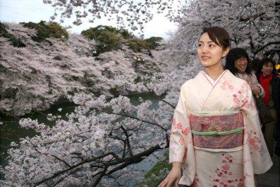 cherry blossom sakura tokyo
