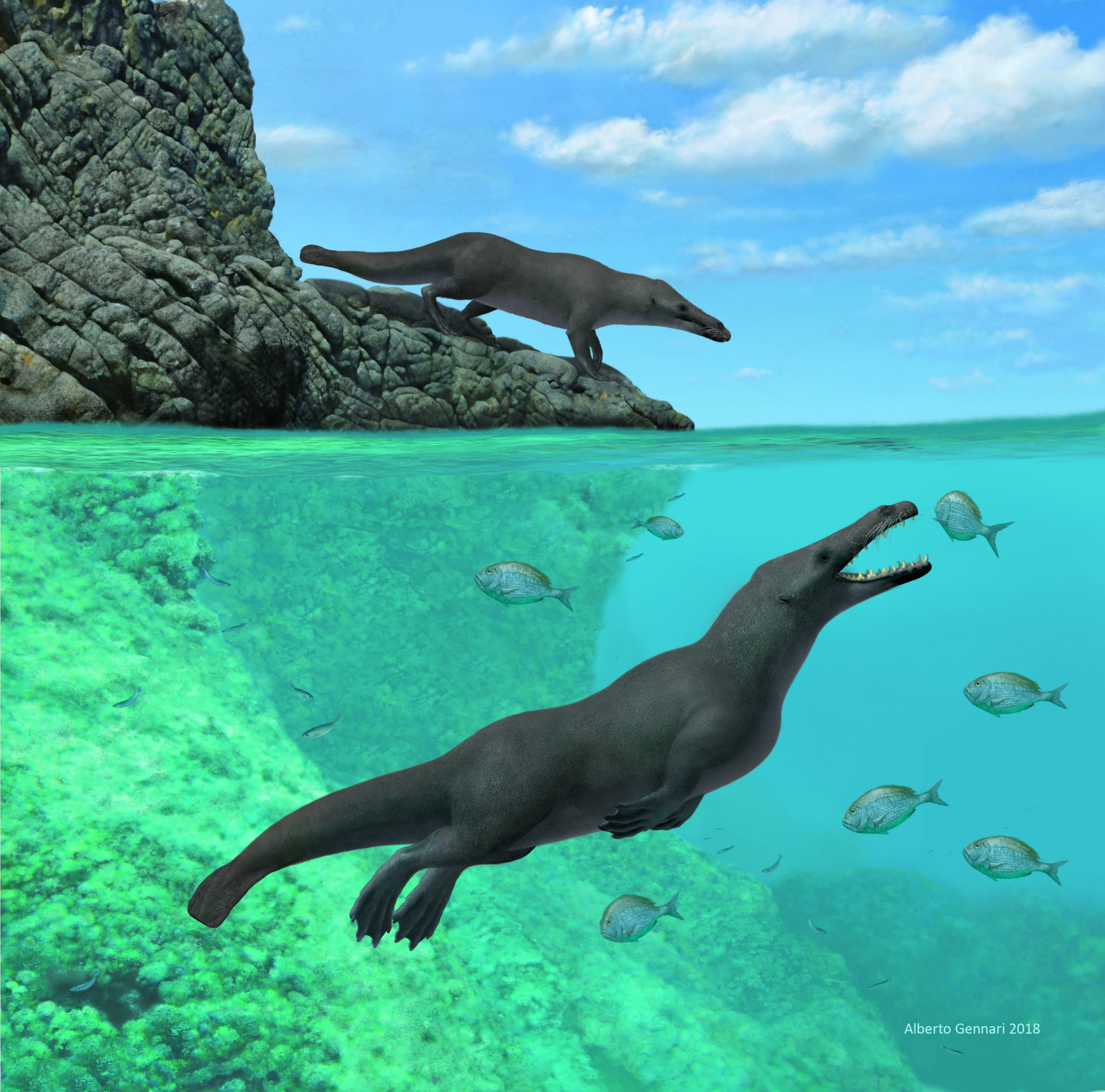 43-million-year-old semi-aquatic whale discovered in Peru