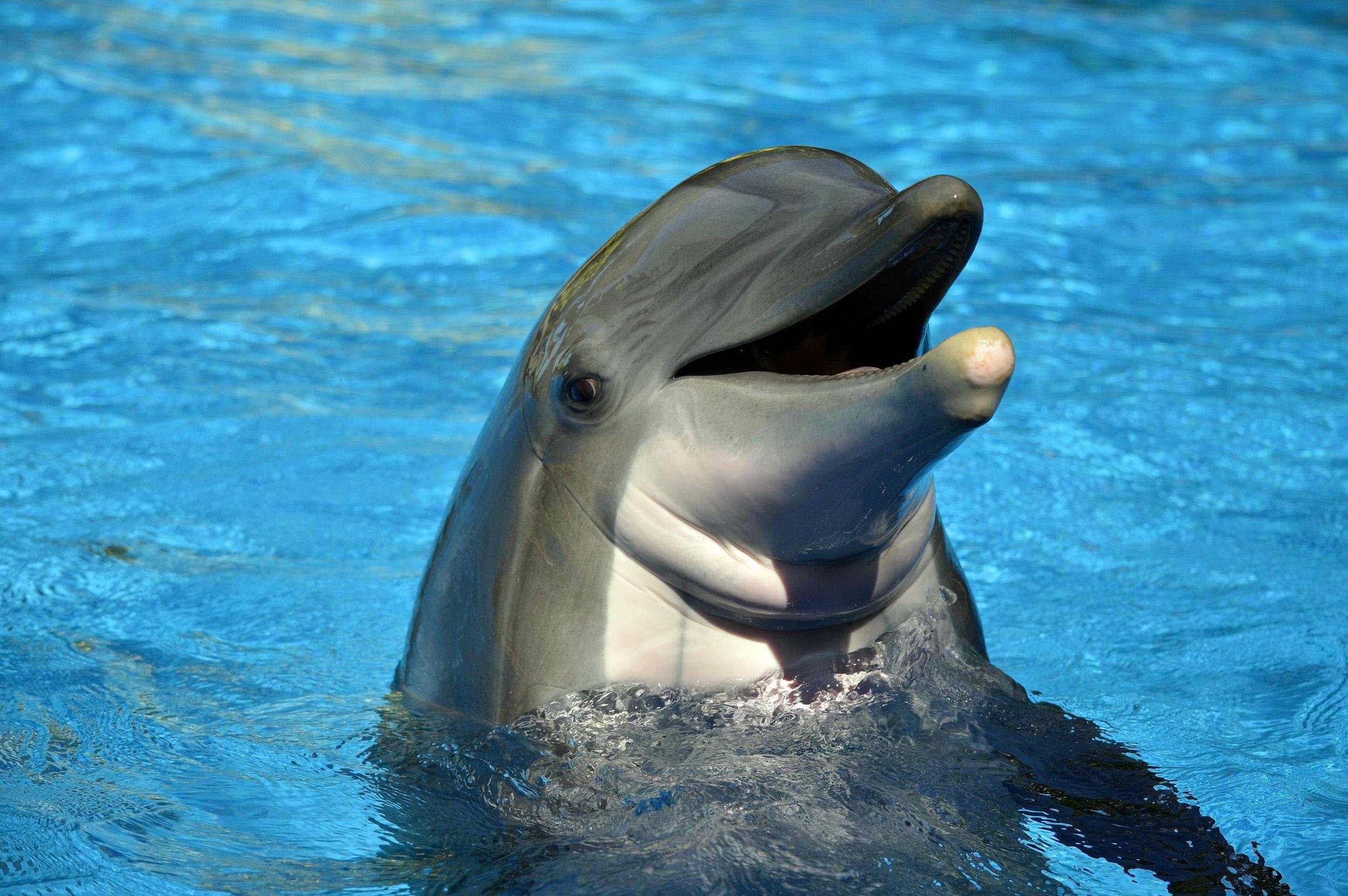 dolphin bottlenose stock getty