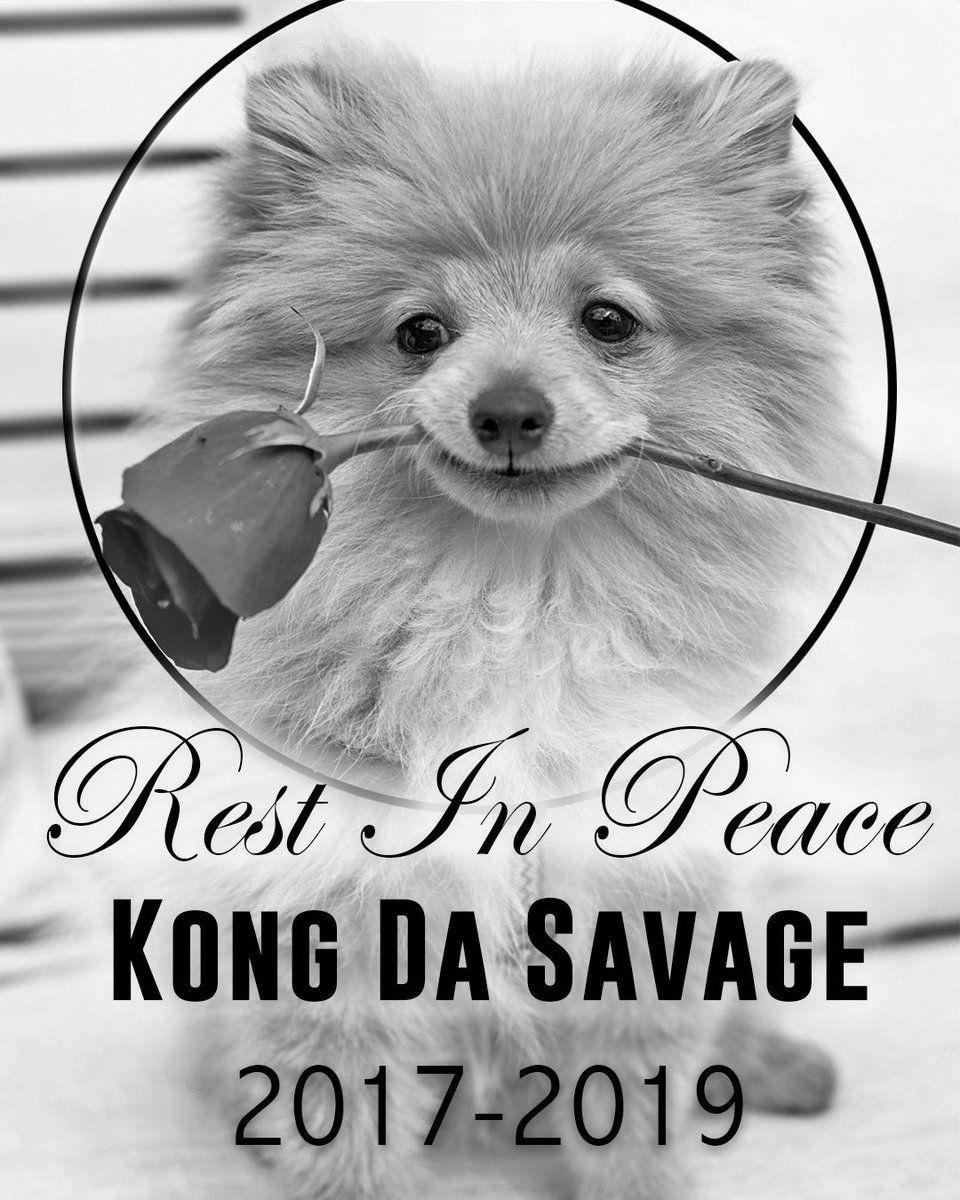 kong da savage logan paul death dog coyote