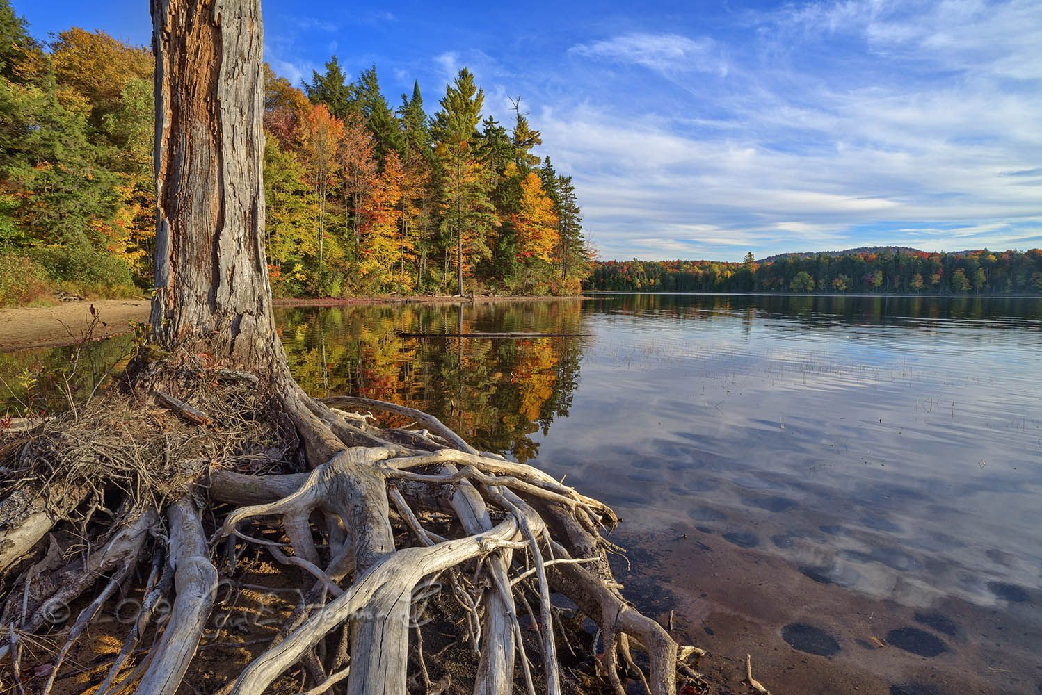 4 The Trails of the Adirondacks - fall tree with roots