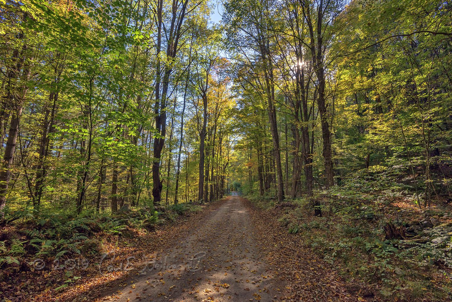 5 The Trails of the Adirondacks - Forest path