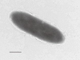Mariana Trench, bacteria