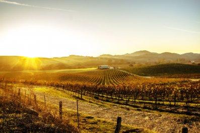 Napa Valley - Spring Travel