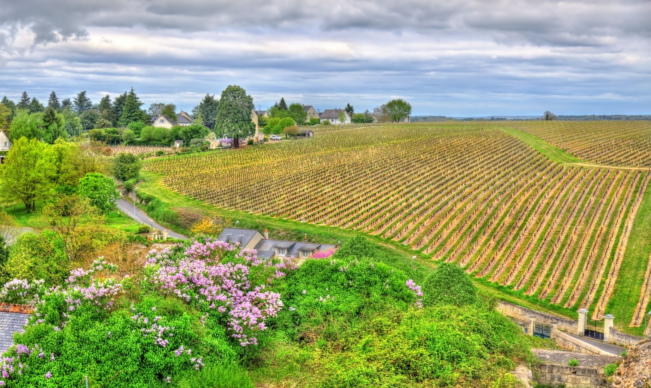 Loire Valley - French Wine Regions