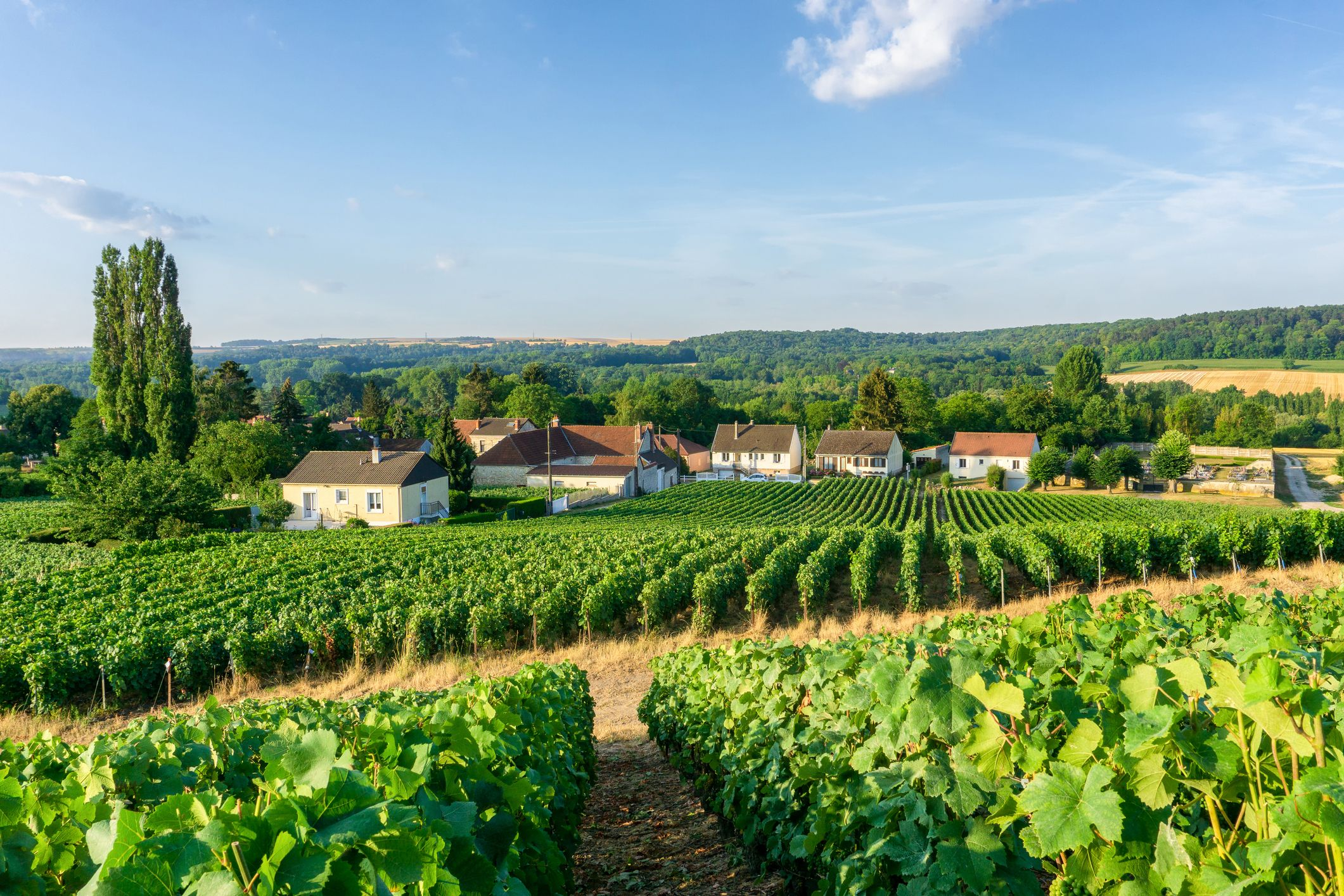 Champagne - French Wine Regions