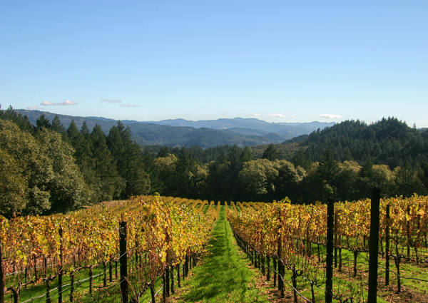 American-Made Sparkling Wine as Rich in History as It Is in Taste—Meet Schramsberg Vineyards