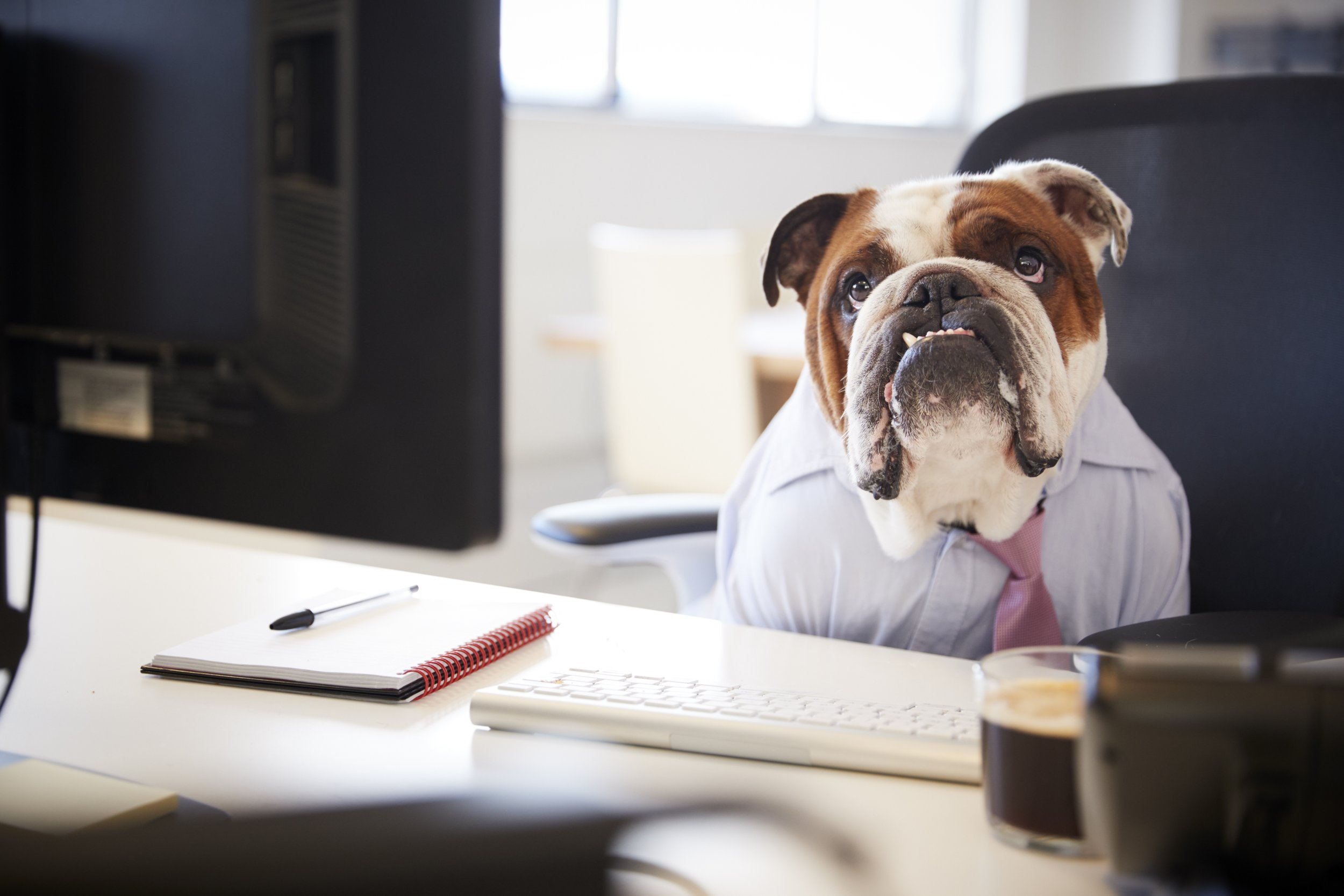 Dog at Work Getty