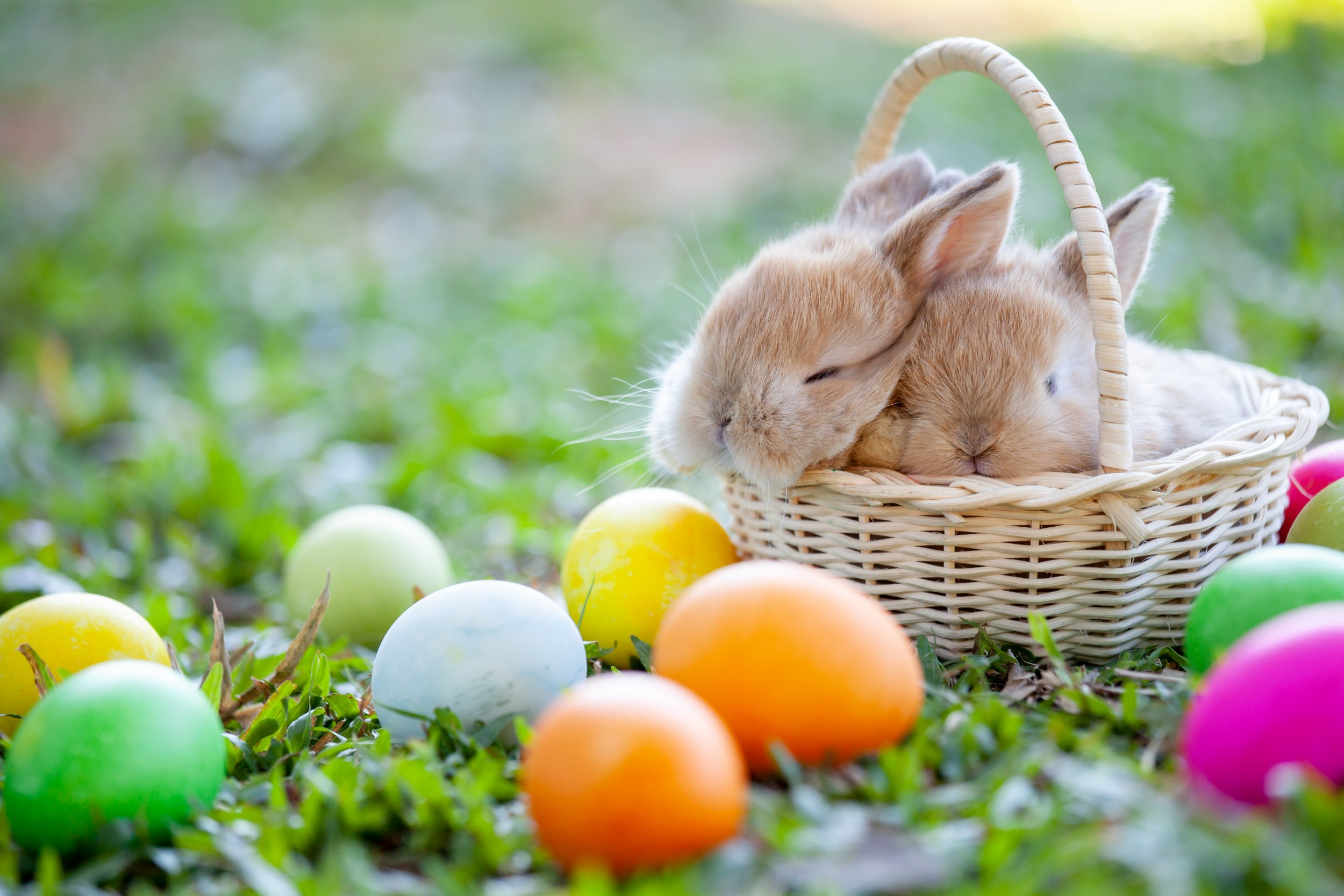 Easter Bunny Getty