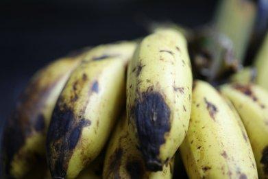 disease banana