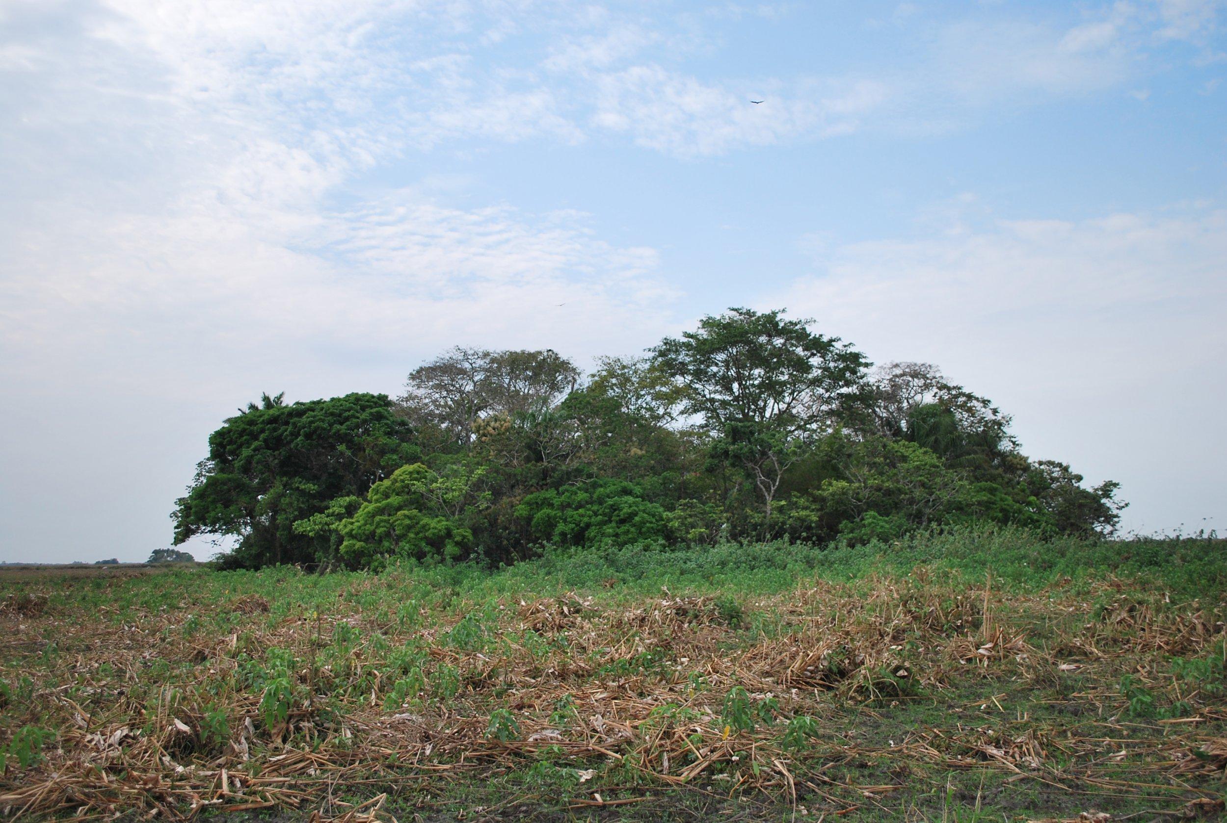 La Chacra forest island, Llanos de Moxos