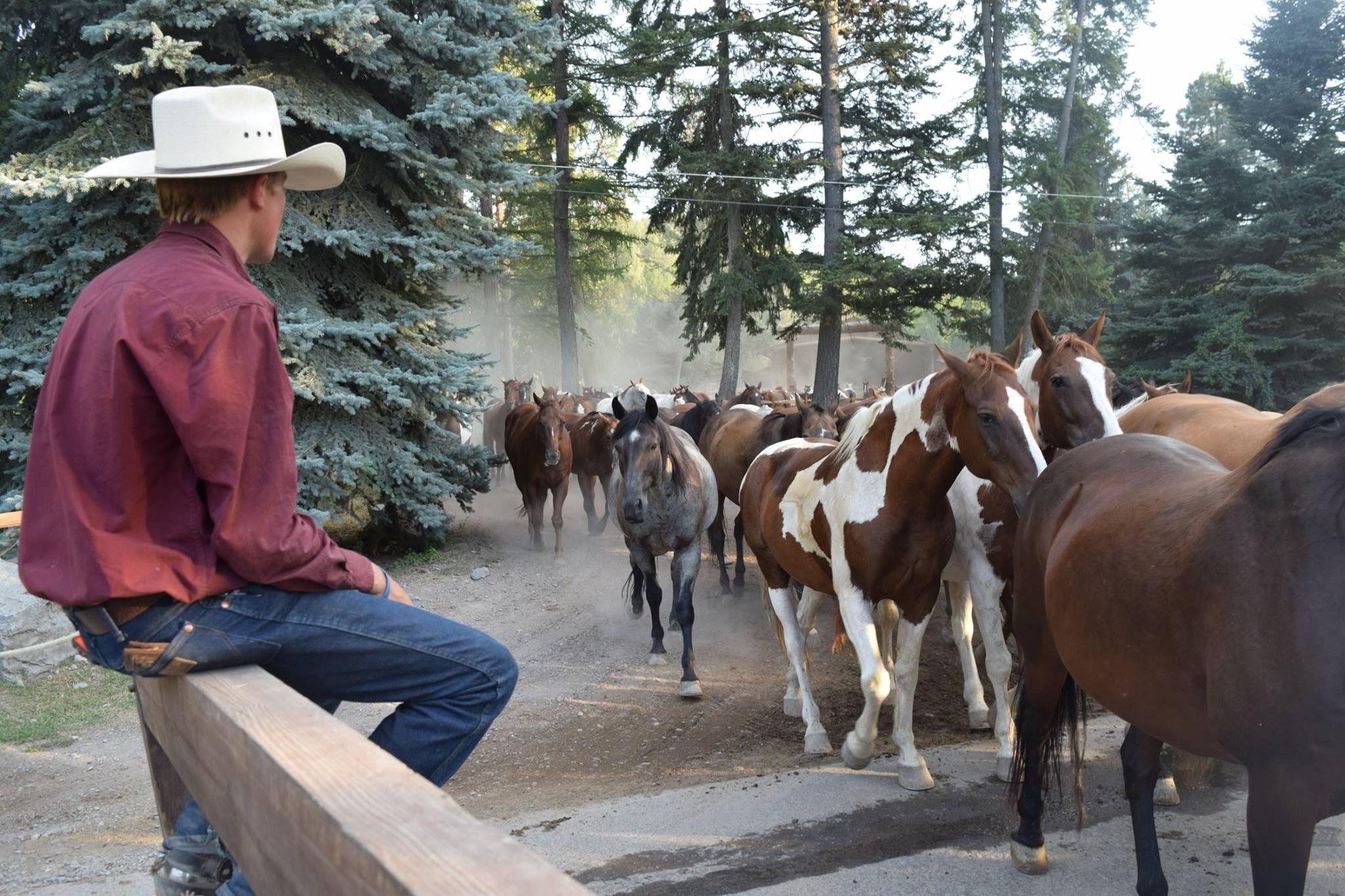 Flathead Lake Lodge_Wrangler Horses