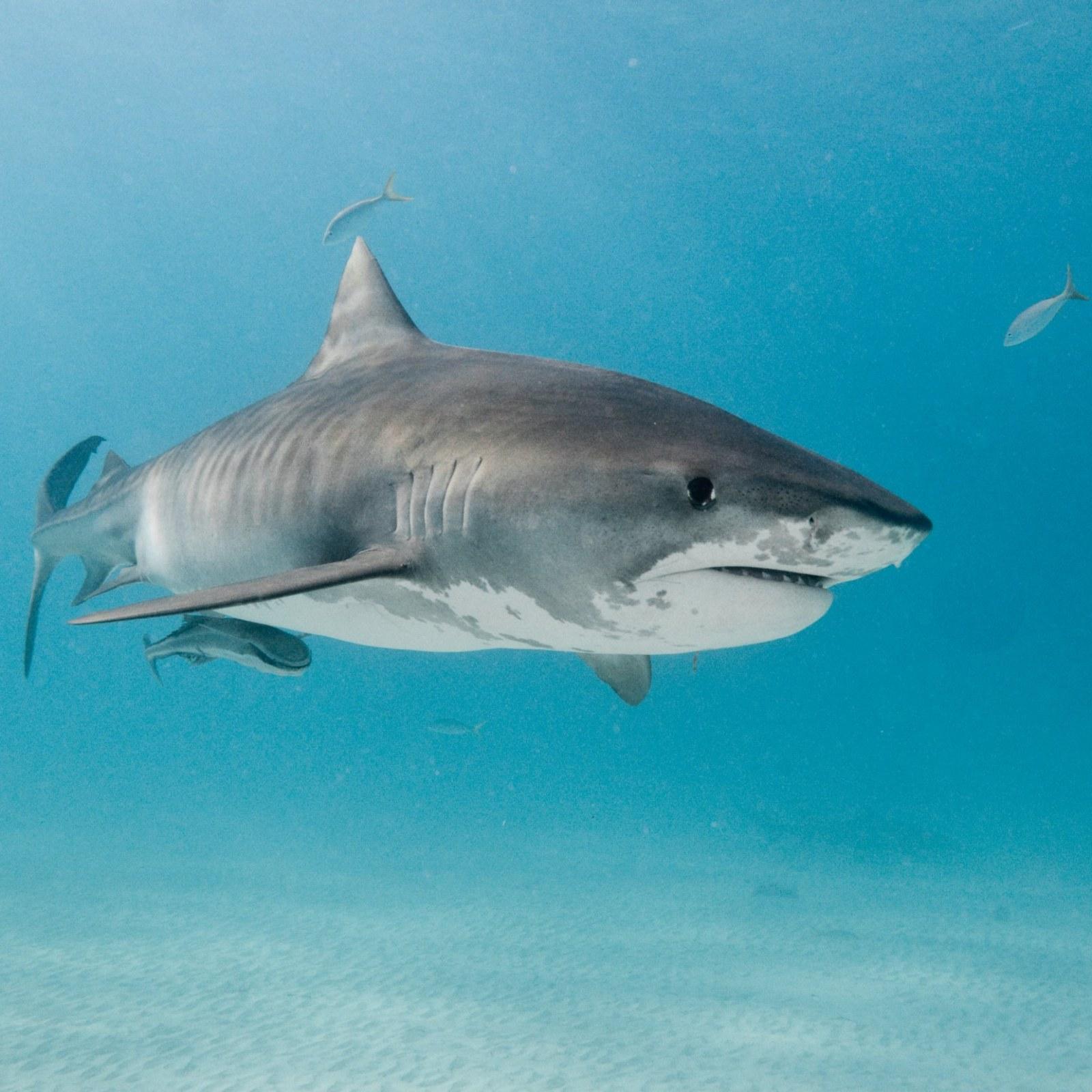 Florida's Fishing Instagram Star Shares Viral Photo of Huge