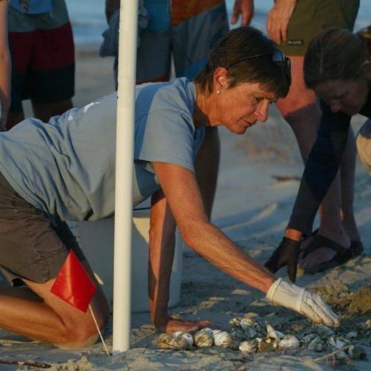 Kiawah Island Turtle Patrol 2