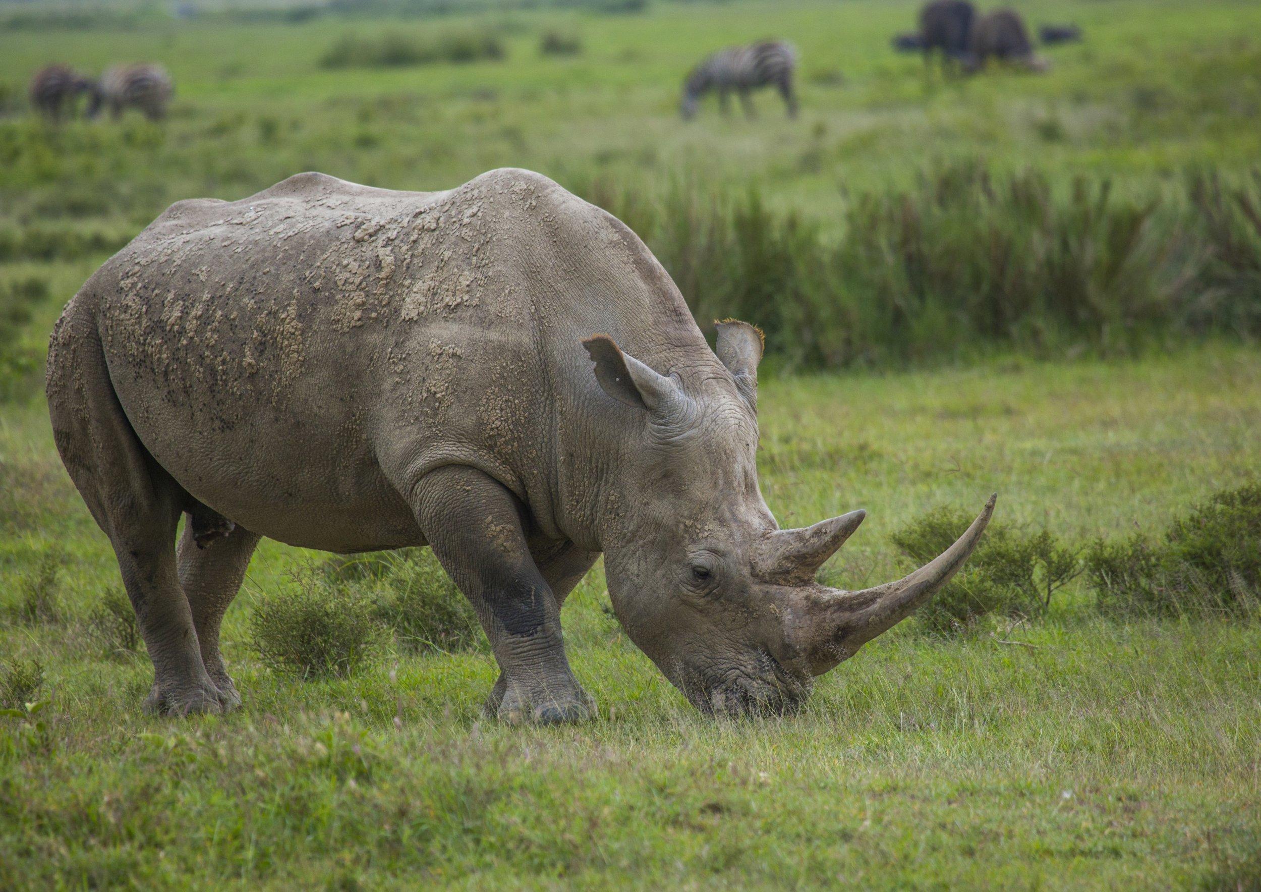 Rhino | Villains Wiki | Fandom