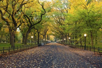 8 Great Things to Do in Central Park COVER