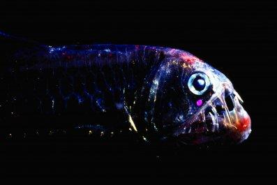 deepseafish