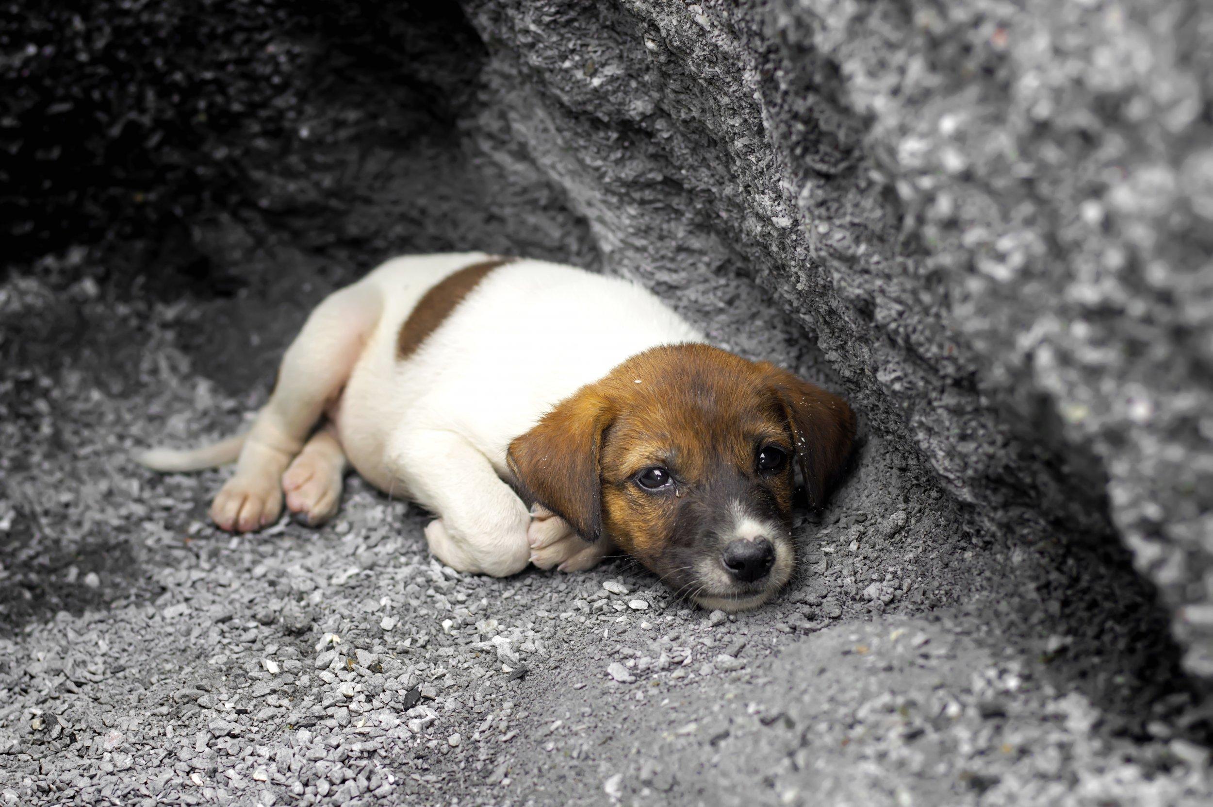 Puppy, Sacrifice