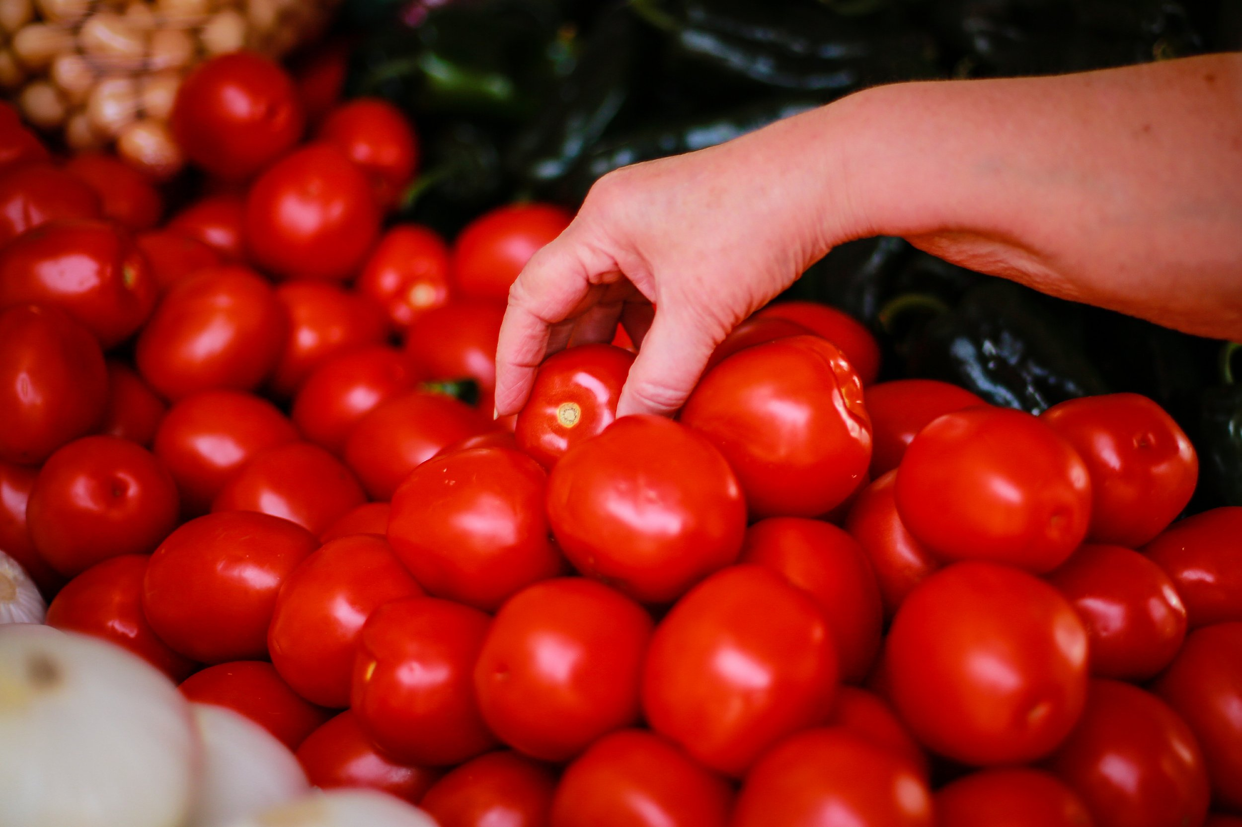 tomato tariffs commerce department mexico