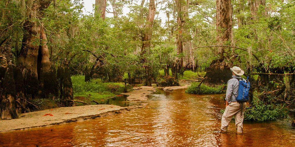 David Stahle, Black River, North Carolina, bald cypress trees