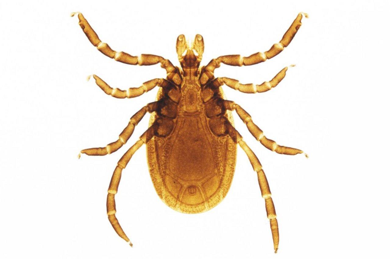 FE_Superbugs_SIDEBAR_Lyme_01_128553669