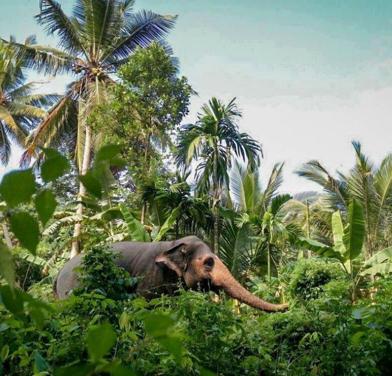 Elephant Freedom Project Sri Lanka