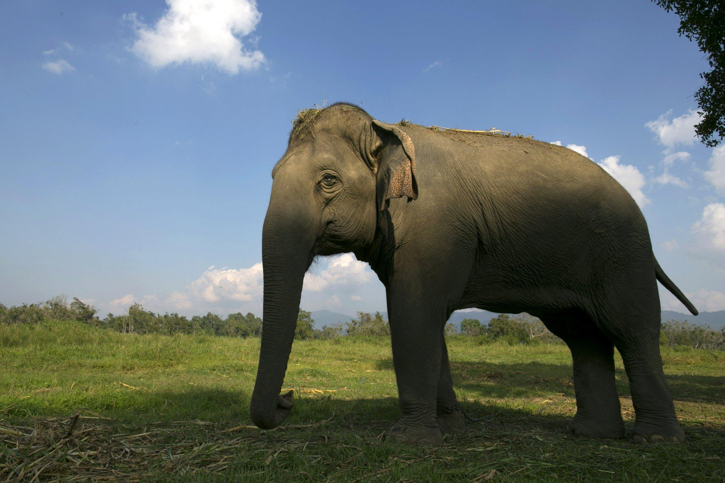 elephant hero pic