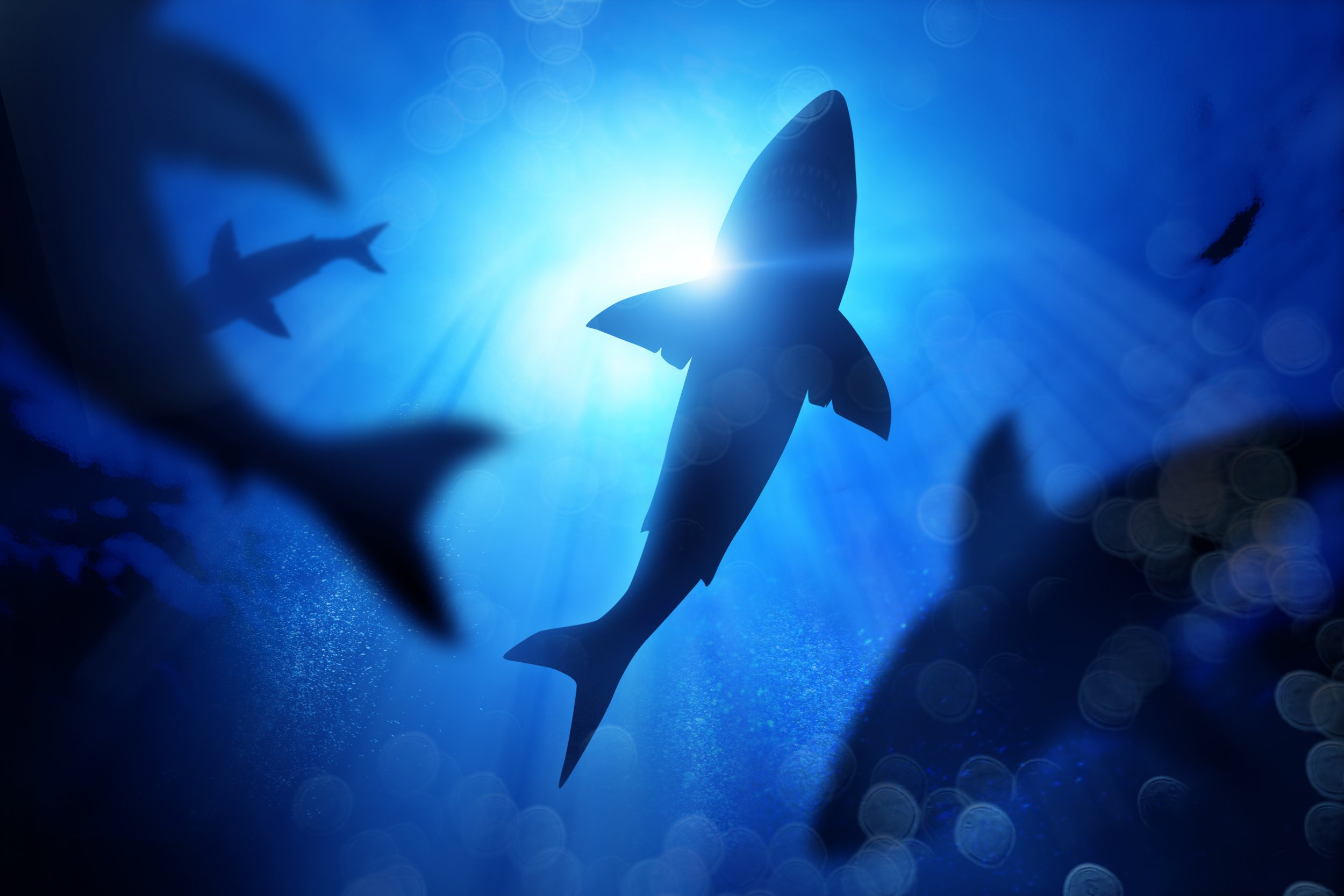 School Of Sharks Under The Waves