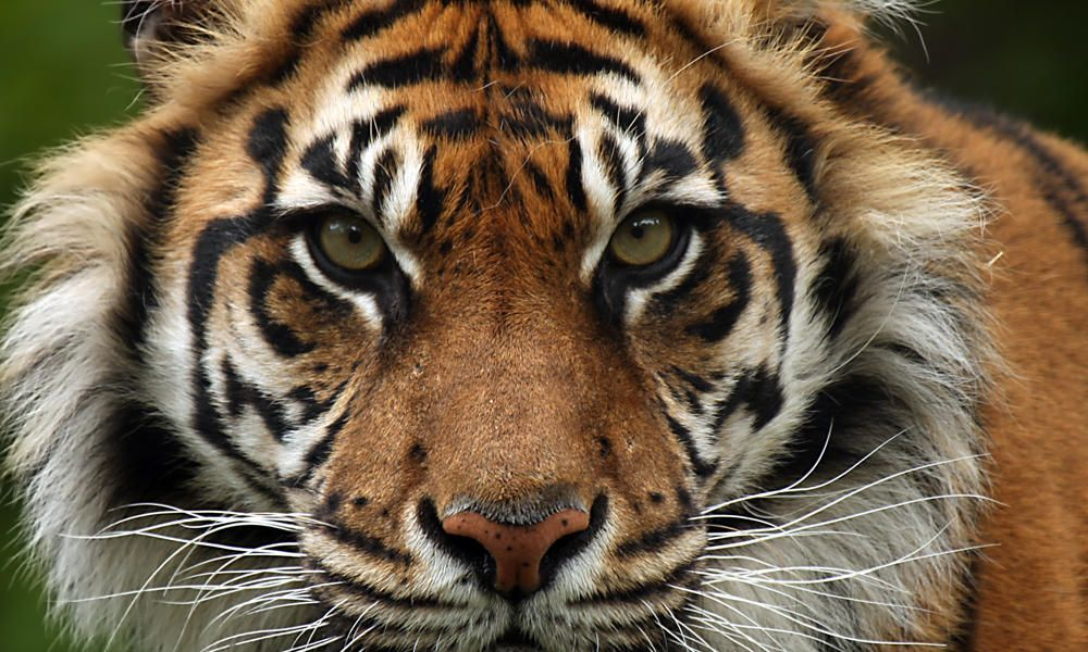8k Animal Wallpaper Download: Endangered Species Day 2019: List Of Most Threatened