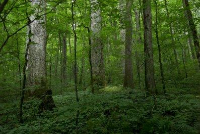 trees, Joyce Kilmer Memorial park