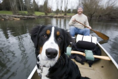dog in canoe ImageCountry Getty Images
