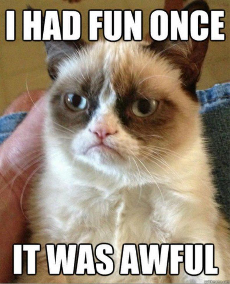 grumpy cat original
