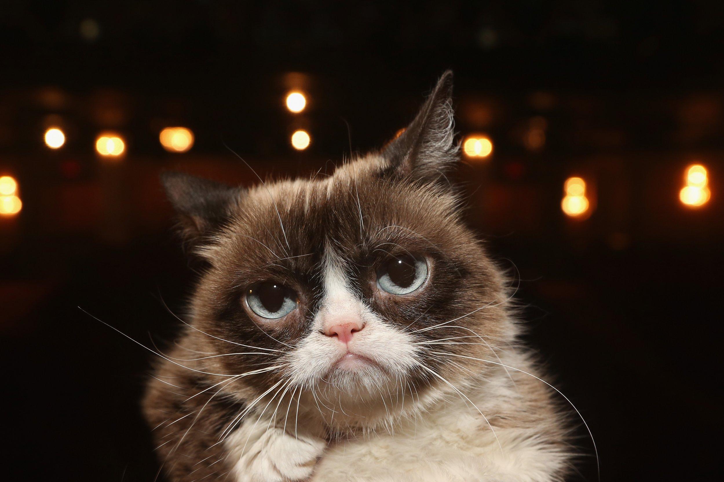 What Was Grumpy Cat's Net Worth? Viral Cat Dies At Age 7 ...
