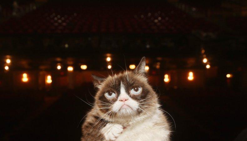 grumpy cat tardar sauce what kind of cat