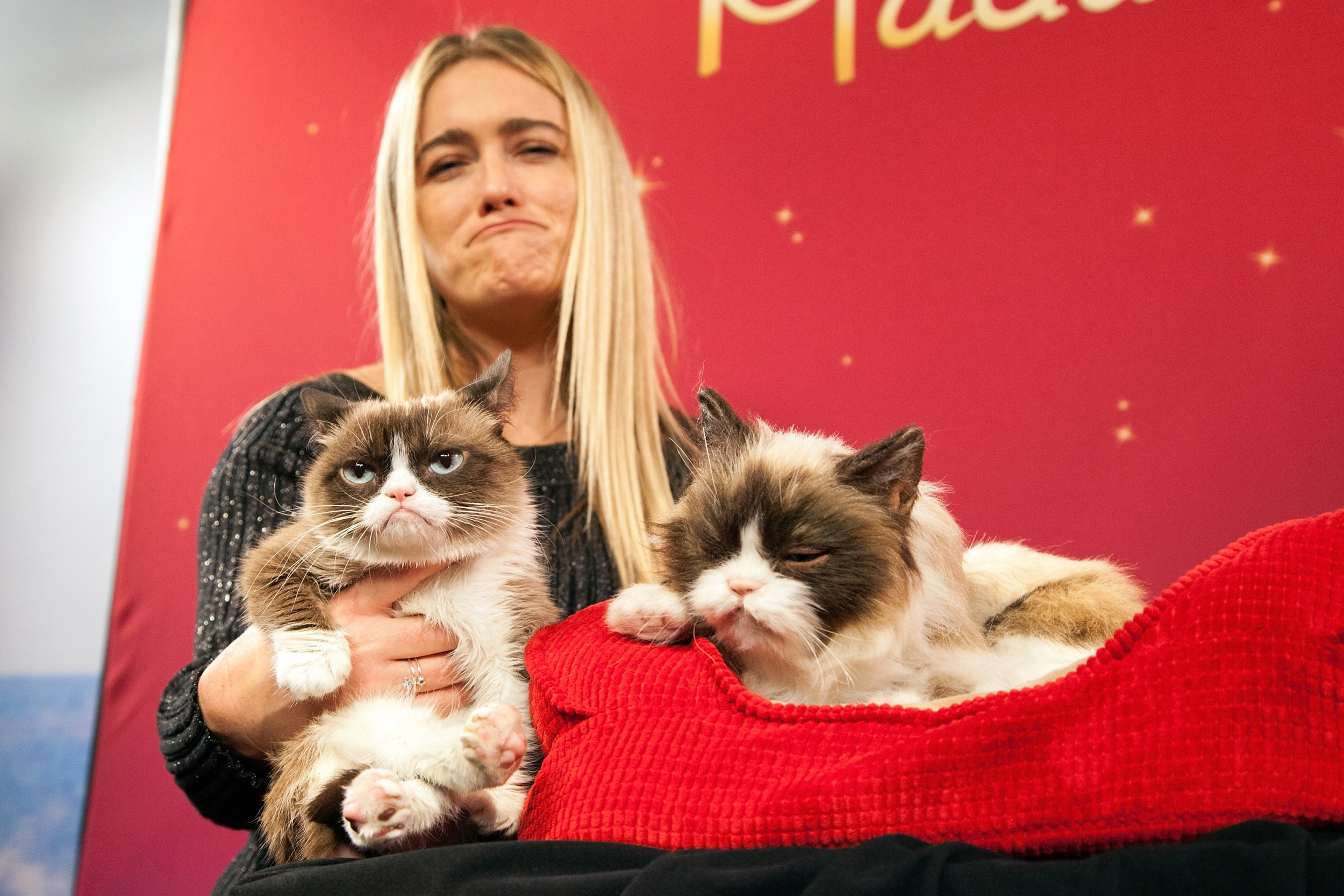 Who is Grumpy Cat's Owner?