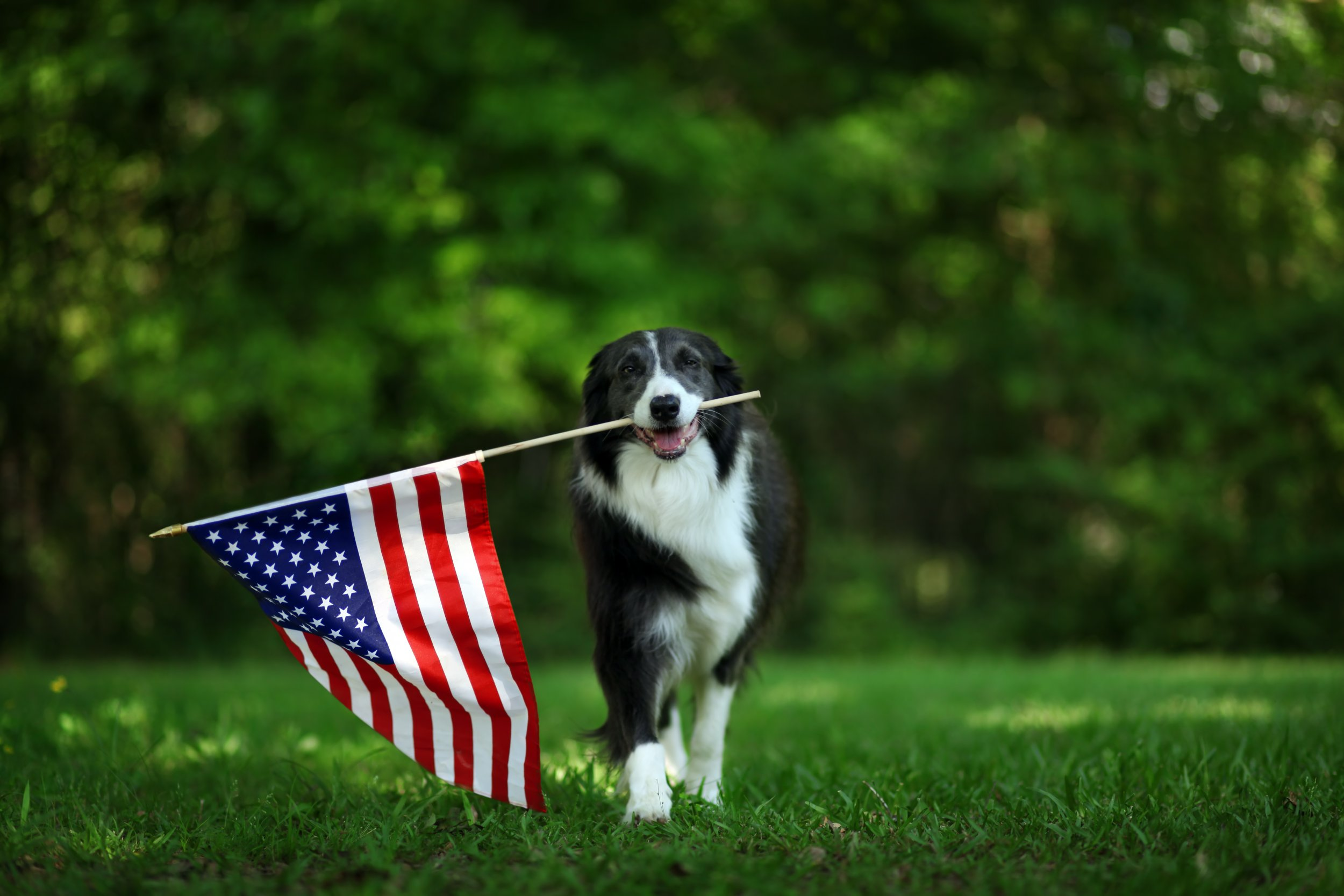 Memorial Day 2019: Are Banks, Post Office, DMV Open or