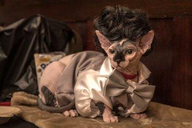 Cat Fashion Show_Credit Mark McQueen (1)