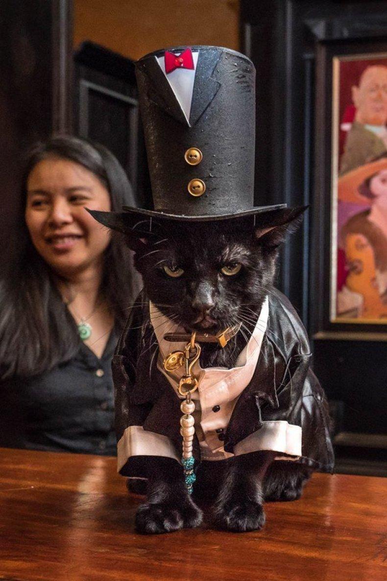 Cat Fashion Show 2_Credit Mark McQueen