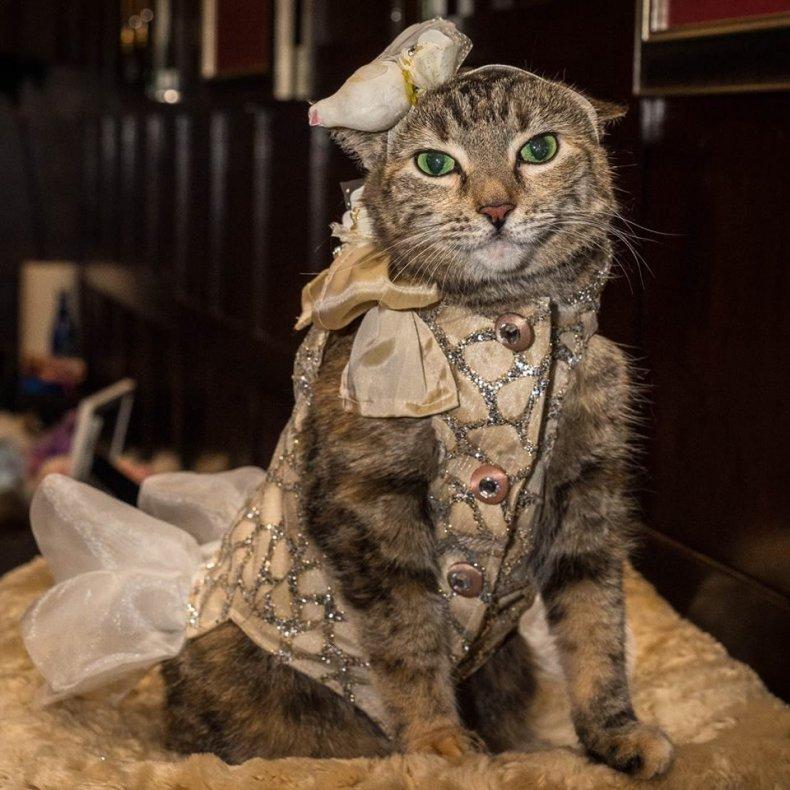 Cat Fashion Show 3_Credit Mark McQueen