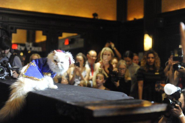 Cat Fashion Show 5_Credit Mark McQueen (2)